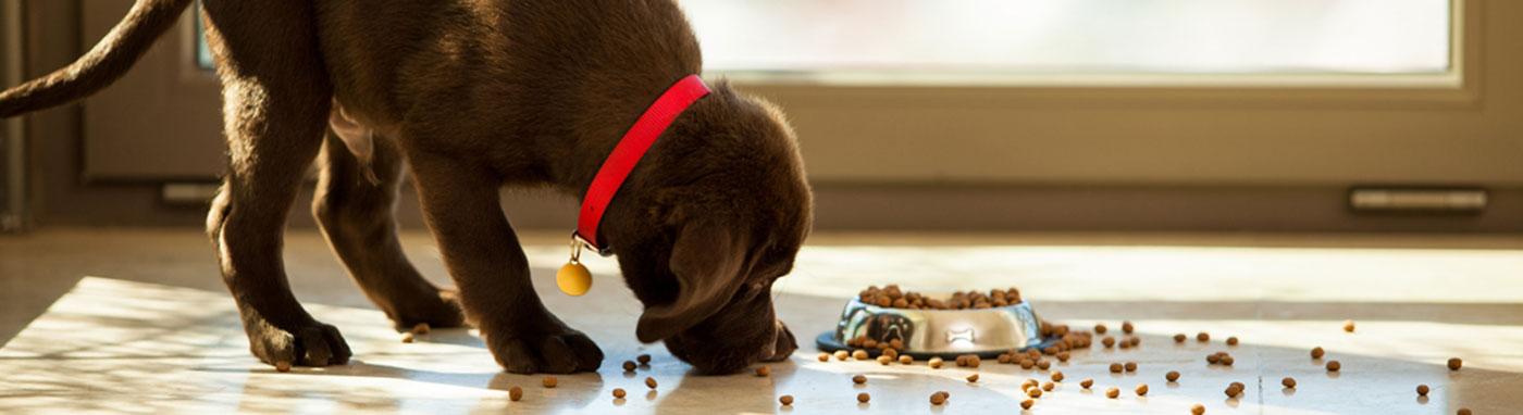 buy dogs in Iowa City Pet Stores in Iowa City, Pet Supplies, Buy Puppies in Iowa city, pet supplies, dog training in Iowa city